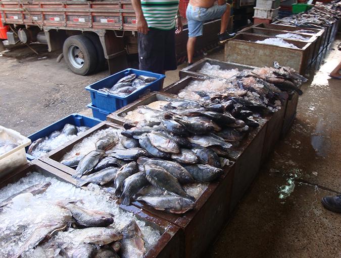 Article image for Brazilian aquaculture: Constraints and challenges (Part 2)