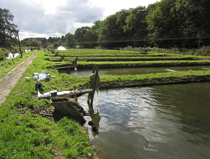 Article image for Linking water treatment practices and fish welfare