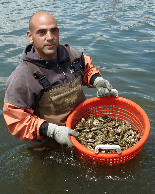 Article image for Stubbornness helps aquaculture persevere in northeastern U.S.