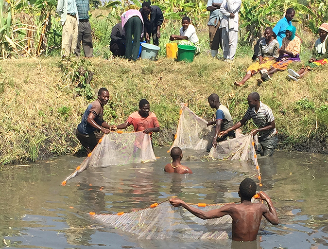 Article image for Images: Small-scale aquaculture emerging in Africa