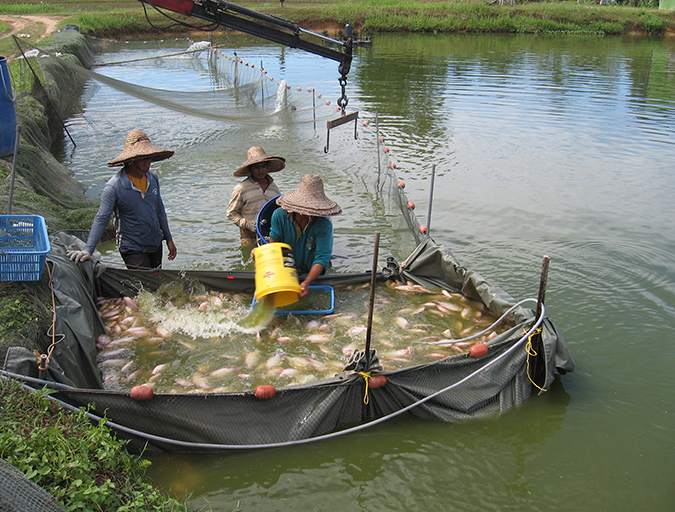 Article image for Fisheries and aquaculture: Sister activities with a common goal