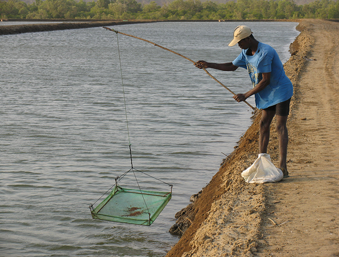 Article image for Decomposition and accumulation of organic matter in ponds