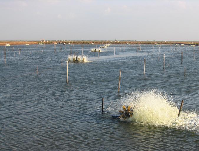 Article image for La correcta circulación del agua en los estanques acuícolas es crítica
