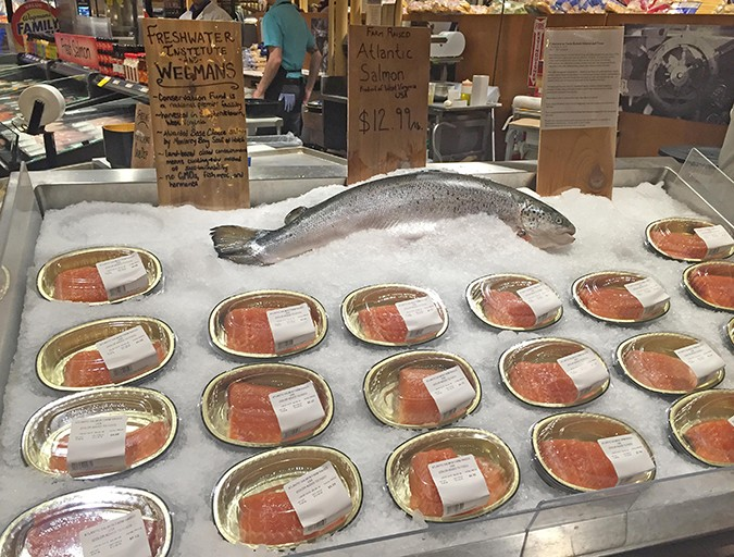 Salmon from the Freshwater Institute on display at a Wegman's seafood counter.