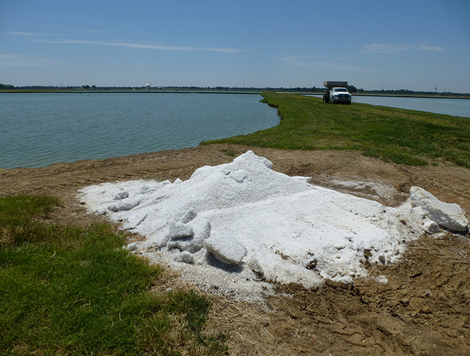 Article image for Common salt a useful tool in aquaculture, part 2