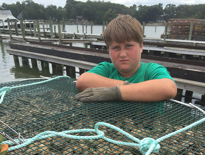 Article image for Ailing waterways hail the oyster's return