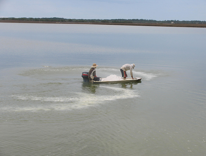 Article image for The importance of liming materials in aquaculture
