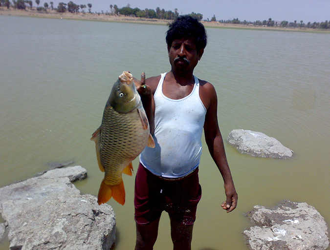 Article image for Weighing the risks of farming non-native fish species in India