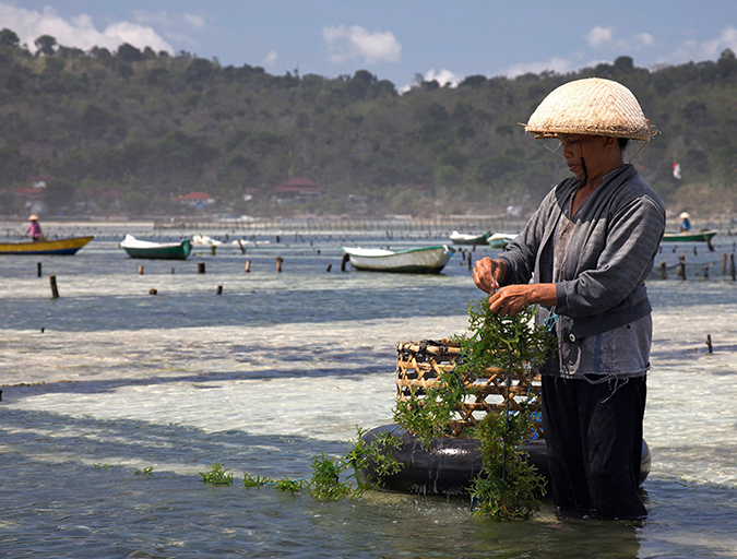 Article image for Can sustainable mariculture match agriculture's output?