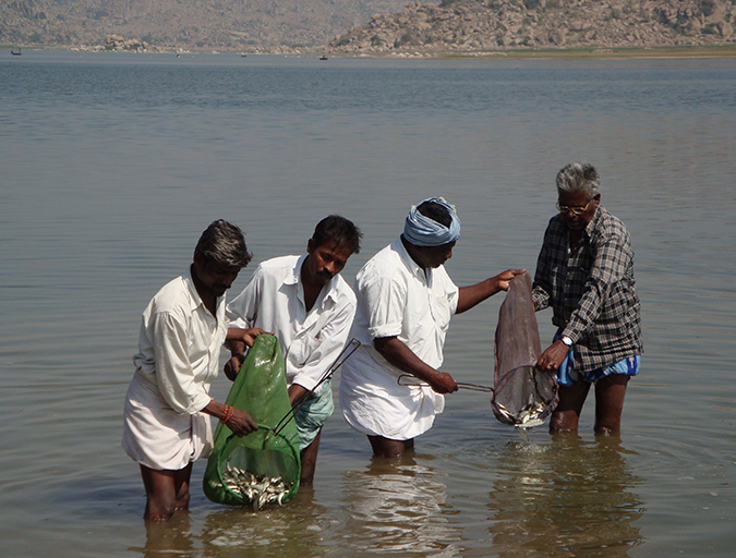 Article image for India's reservoirs show significant potential for aquaculture