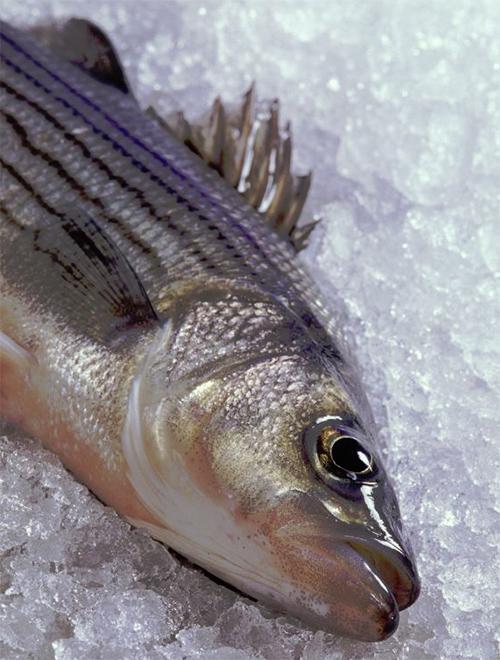 Article image for Comparando los valores nutricionales de pescado blanco silvestre y cultivado