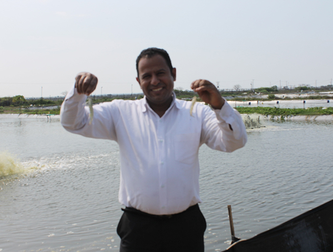 Article image for Selection for disease resistance in Indian white shrimp