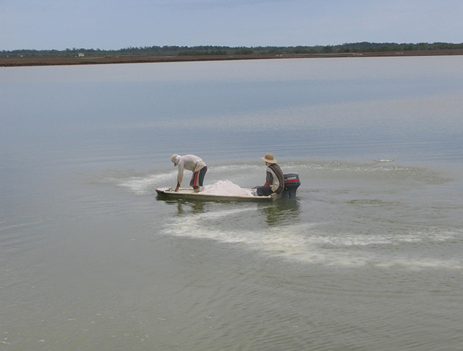 Article image for What causes alkalinity changes in aquaculture waters?