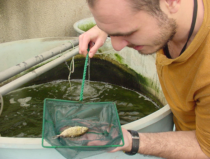 Article image for Surprising results in rabbitfish diet evaluation