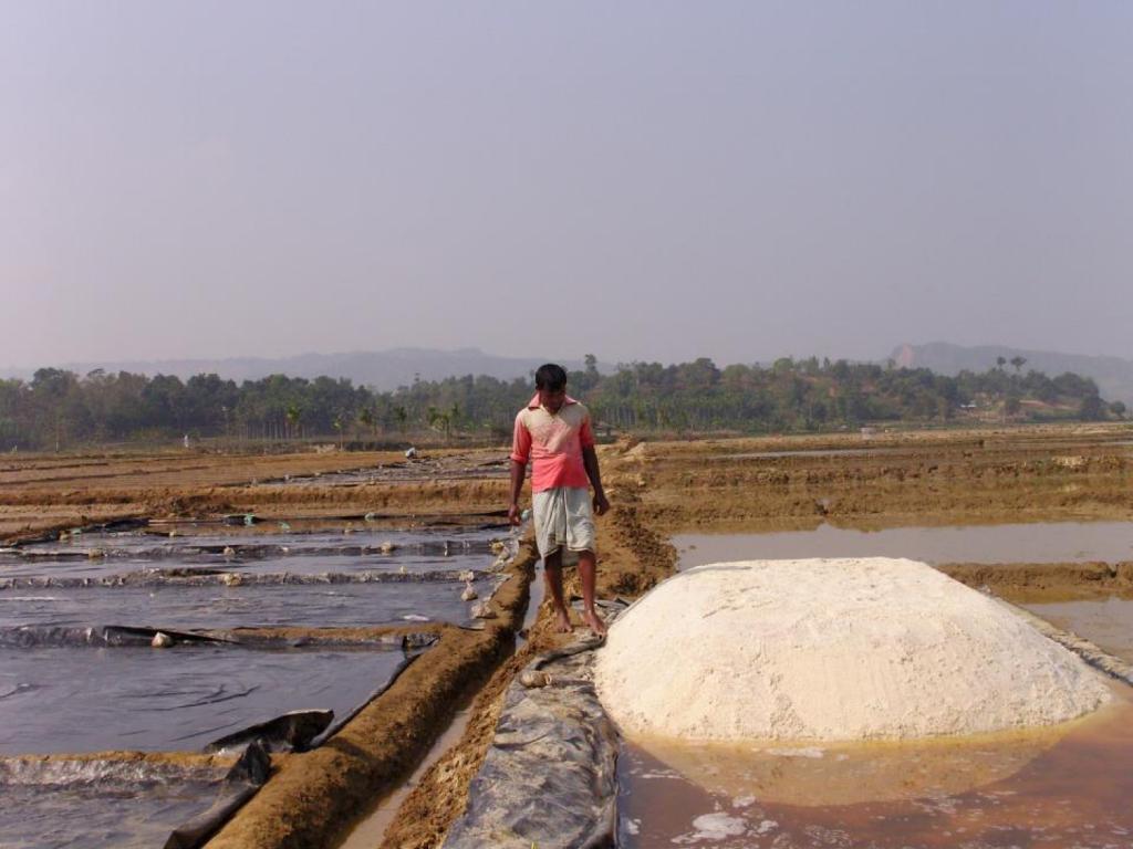 Article image for Artemia, el 'polvo mágico' que alimenta una industria multimillonaria