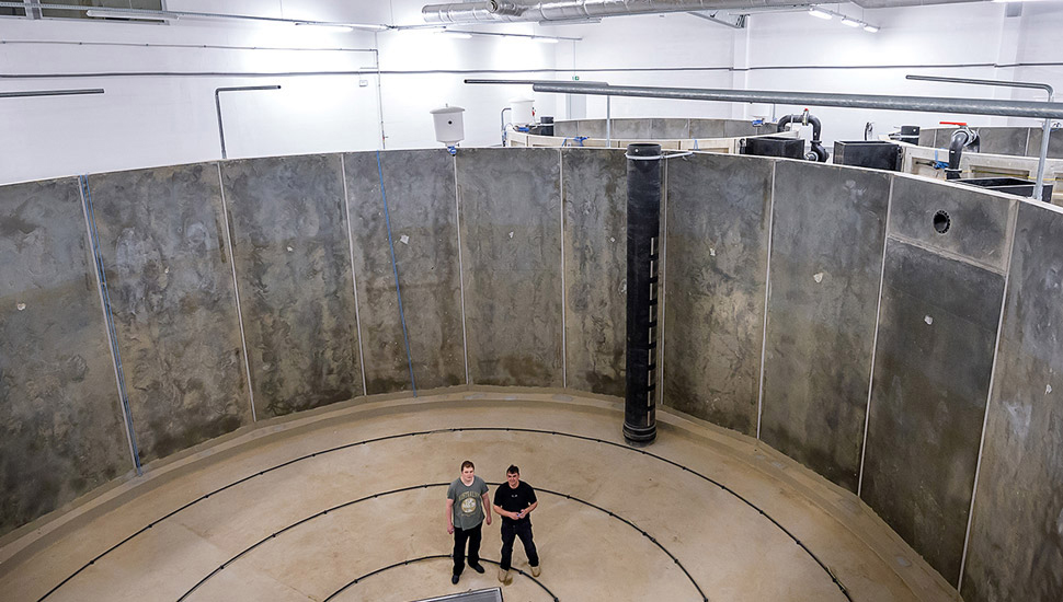 Article image for Polish RAS salmon farm mixes modern technology with ancient water