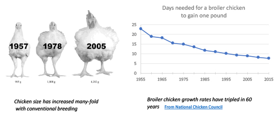 broiler chicken growth rate graph