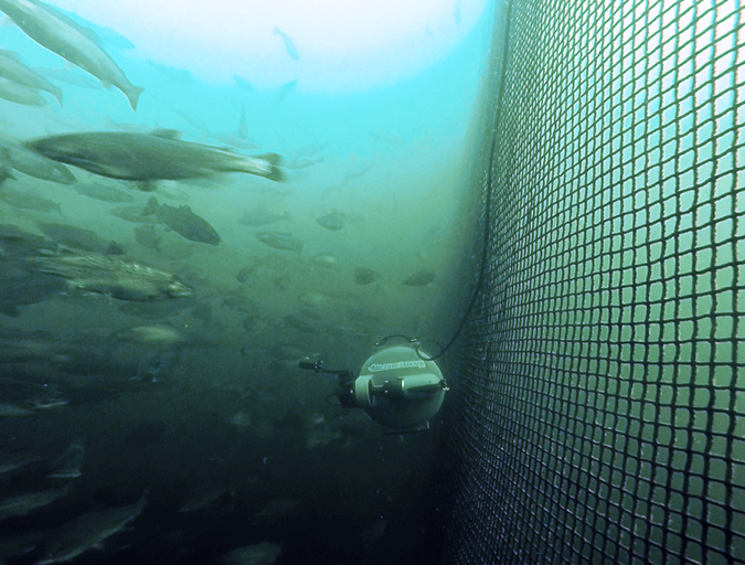 Article image for Rise of the machines: Aquaculture's robotic revolution
