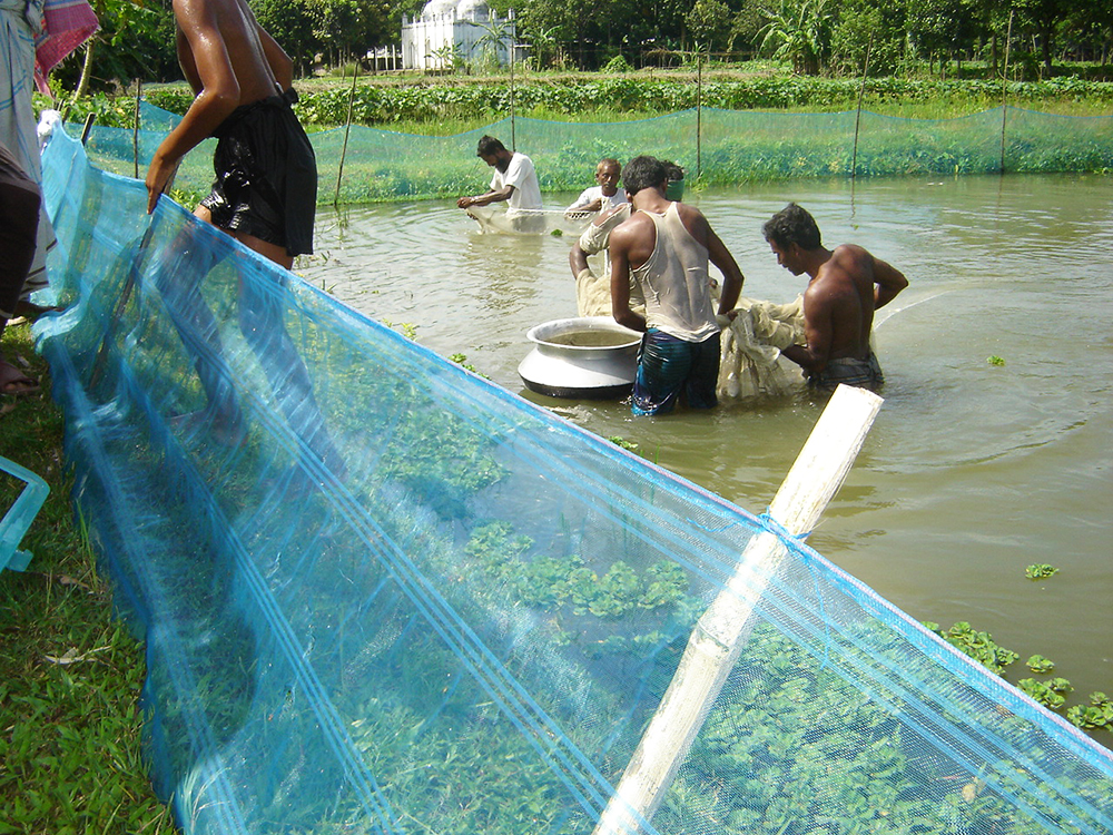Article image for How will climate change impact seafood production?