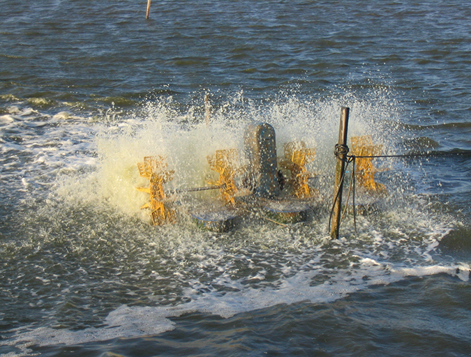 Article image for Does Coriolis force impact aerator placement in aquaculture ponds?
