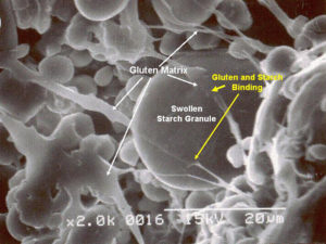 Electron scanning micrograph of gluten starch