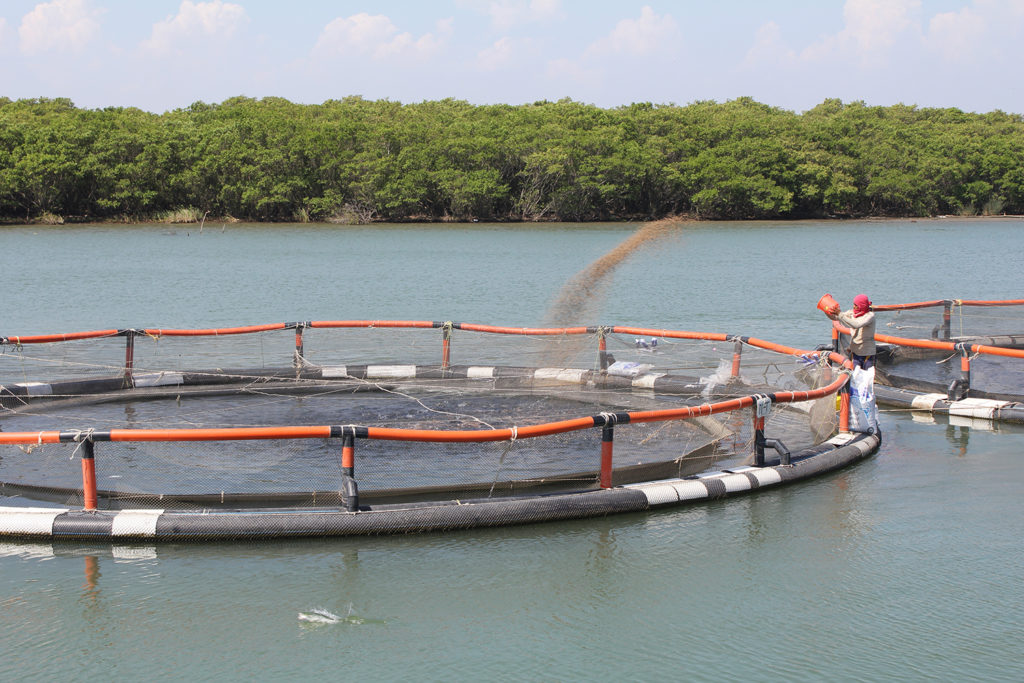 Article image for Comprensión de la demanda de oxígeno de los alimentos acuícolas