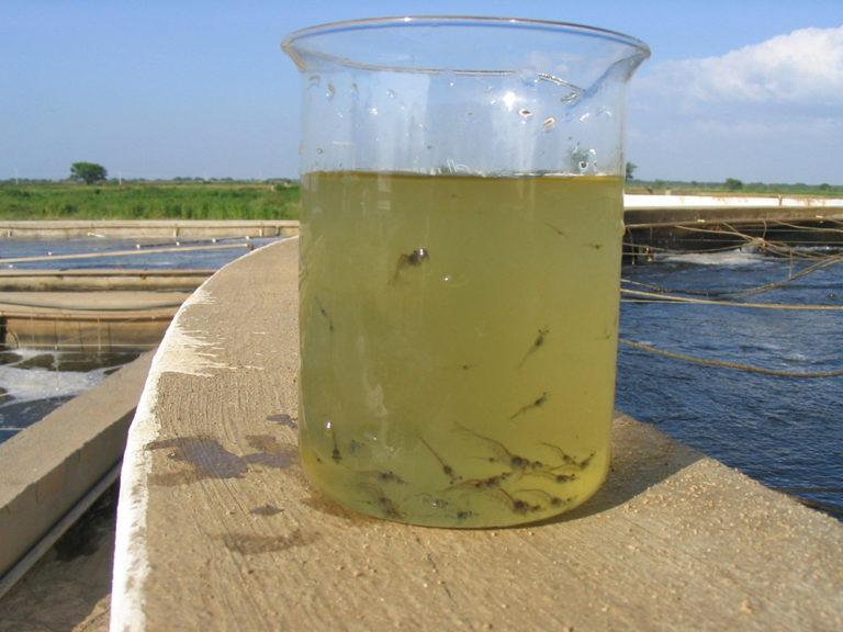 Article image for Building a better shrimp nursery, part 1