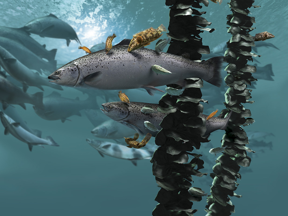 Article image for In sea lice fight, salmon farmers phasing out hydrogen peroxide