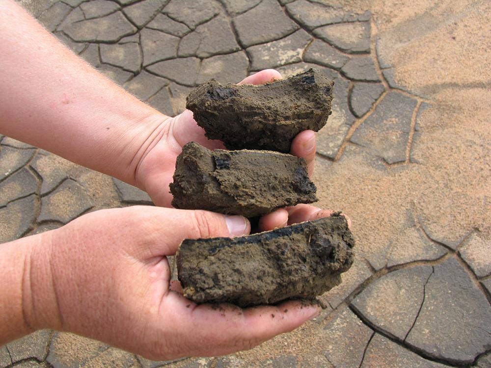 Article image for Cómo la descomposición de la materia orgánica impacta los estanques acuícolas