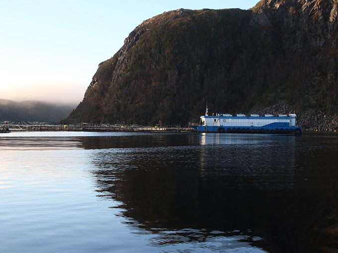 Article image for Aquaculture's solid opportunity on The Rock