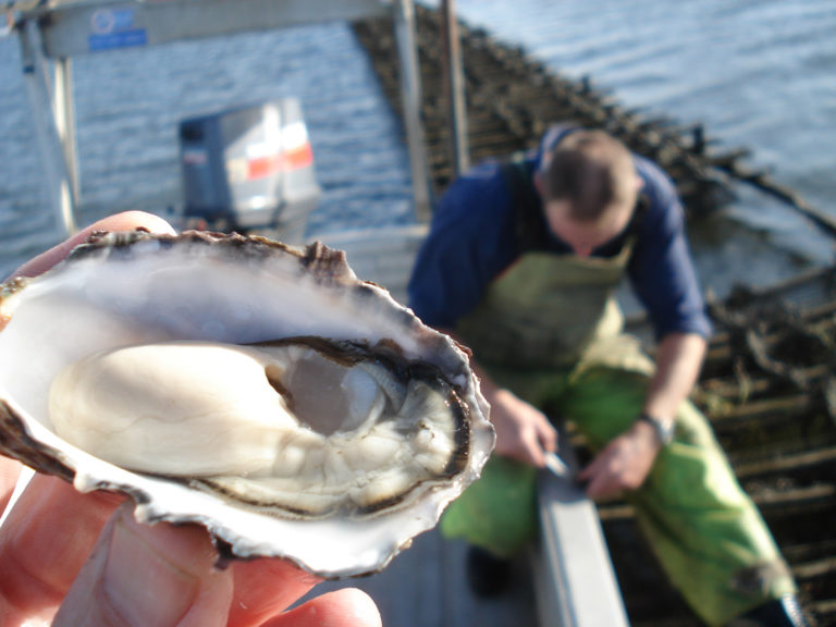 Article image for Turning the tide against a deadly oyster virus