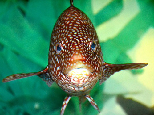 Article image for Extensive wrasse use keys up 'cleaner fish' conservation questions