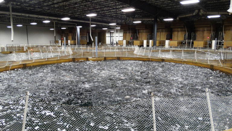 Article image for AquaBounty, con nueva instalación RAS, espera ganar apoyo público para el salmón GM