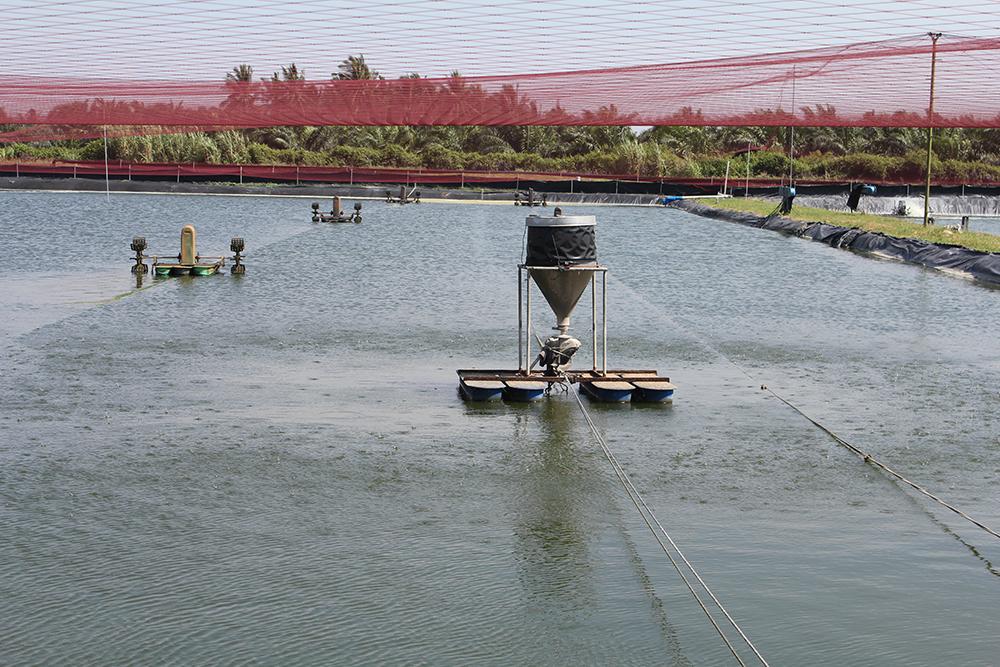 Article image for ¿Qué le sucede al alimento en los sistemas acuícolas?
