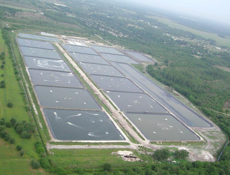 Article image for Crecimiento lejos de la costa: Examinando el cultivo de camarón tierra adentro