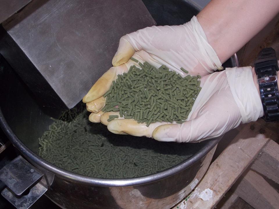 biofloc activated sludge