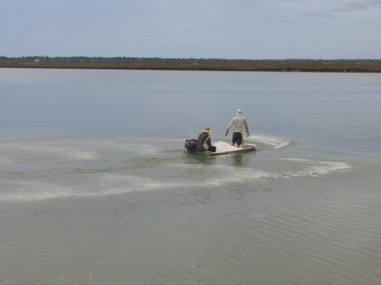 Article image for Lime plays crucial role in aquaculture pond management