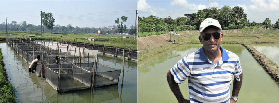 tilapia de Bangladesh