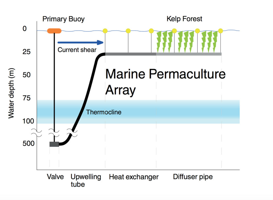 ocean permaculture Climate Foundation