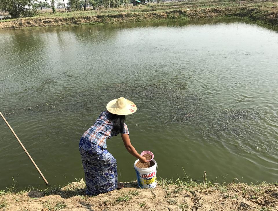 Myanmar tilapia aquaculture USSEC