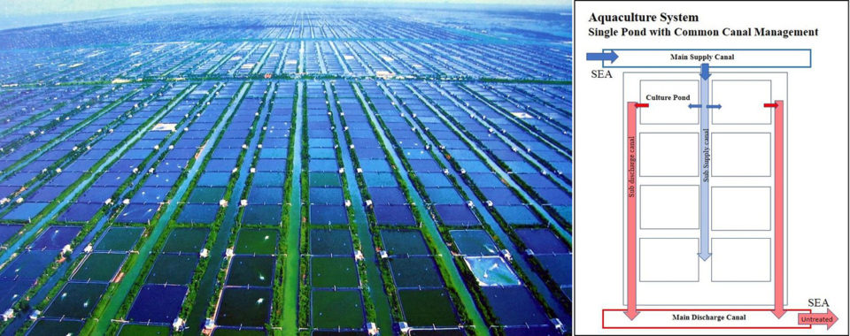 intensive shrimp farm Indonesia