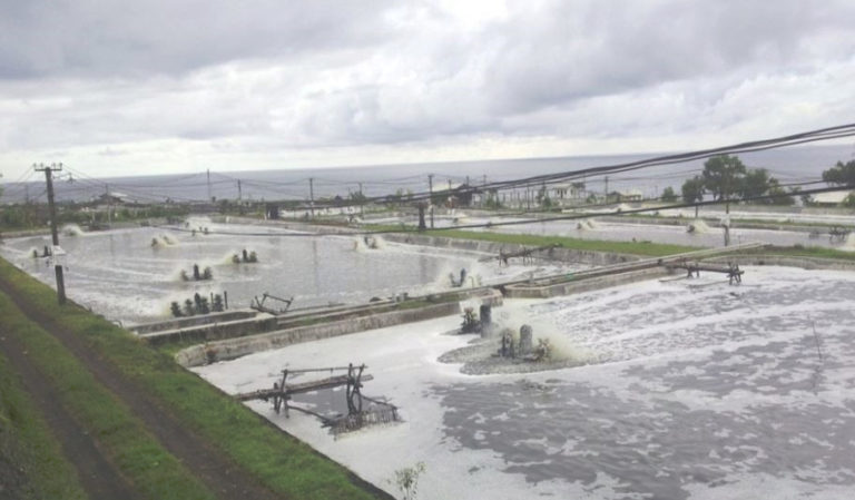 Article image for A look at various intensive shrimp farming systems in Asia