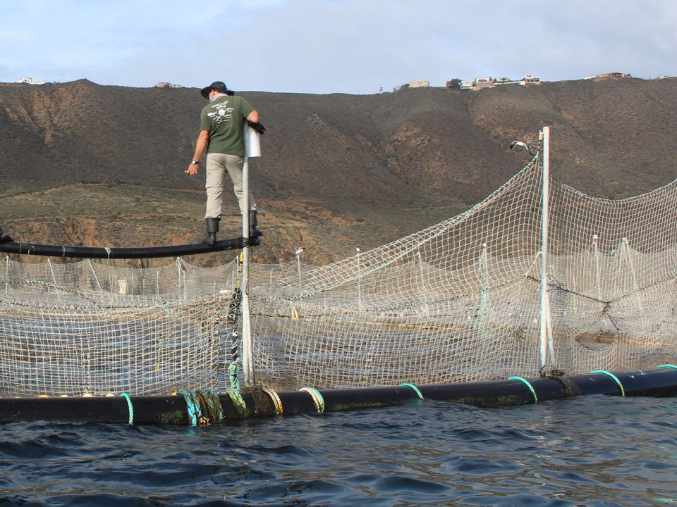 tuna aquaculture