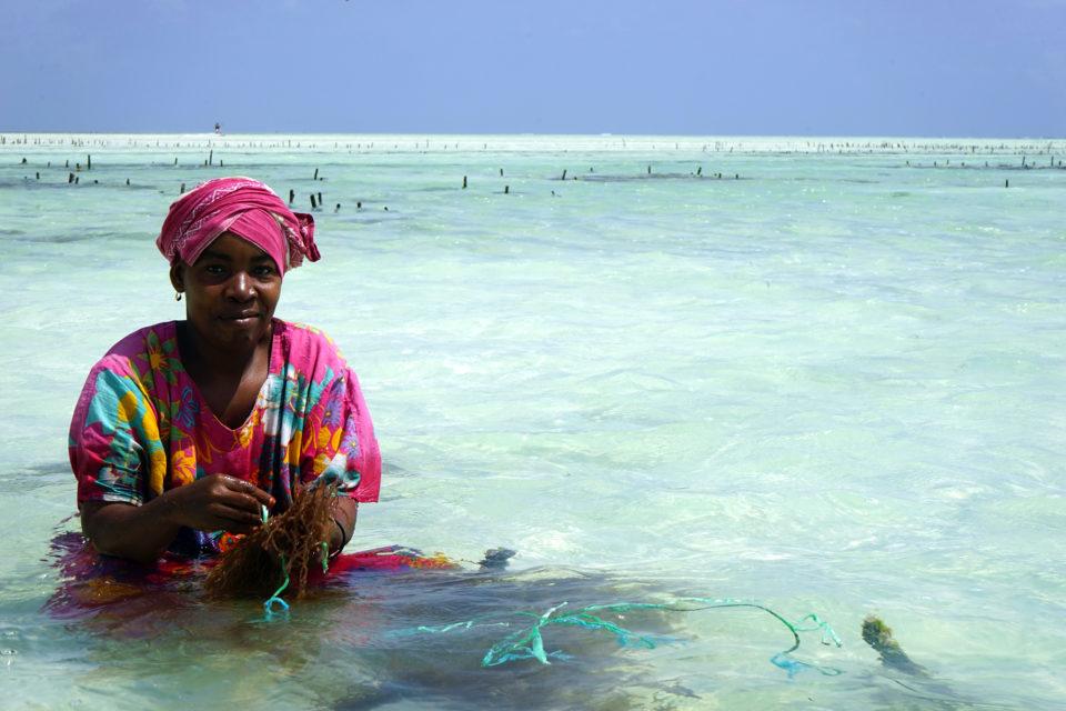 Zanzibar kelp ocean permaculture