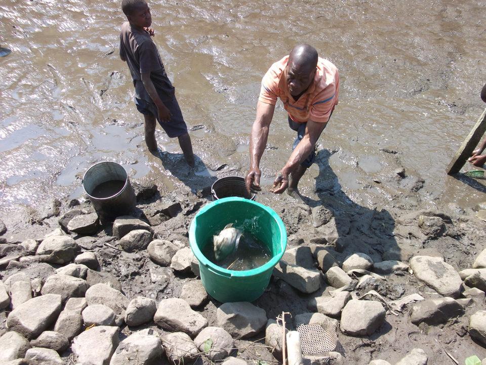 Africa aquaculture investment