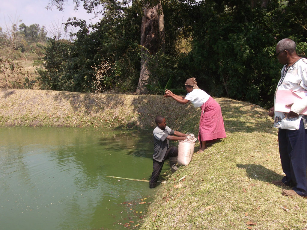 Article image for Investing in Africa's aquaculture future, part 1