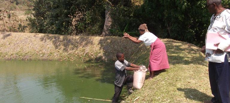 Africa aquaculture