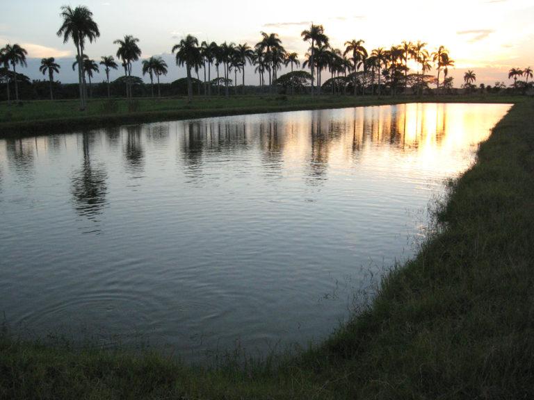 Article image for El impacto del dióxido de carbono atmosférico y la alcalinidad en la acuacultura de agua dulce