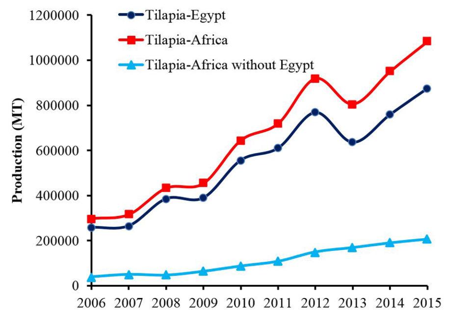 Egypt Africa tilapia