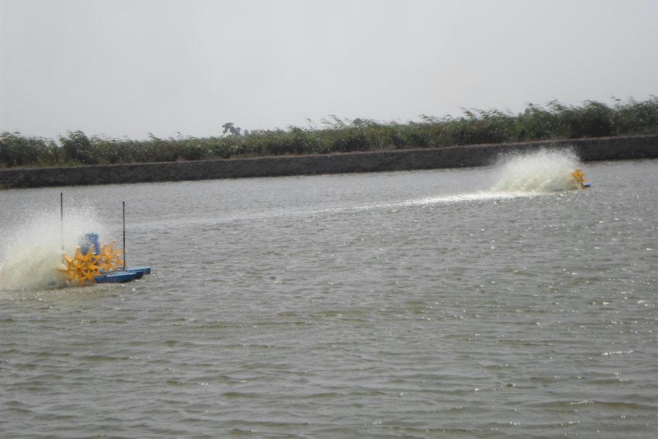 Egypt tilapia pond